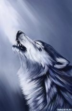 Рисунки волка – Волки, аватары и картинки с волками, скачать аватарки с хищными животными