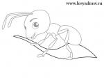 Нарисовать муравейник – Как нарисовать муравейник с муравьями карандашом или красками поэтапно?