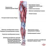 Рисовать ноги – Как рисовать ноги человека? Подробно рассмотрим строение и технику рисования