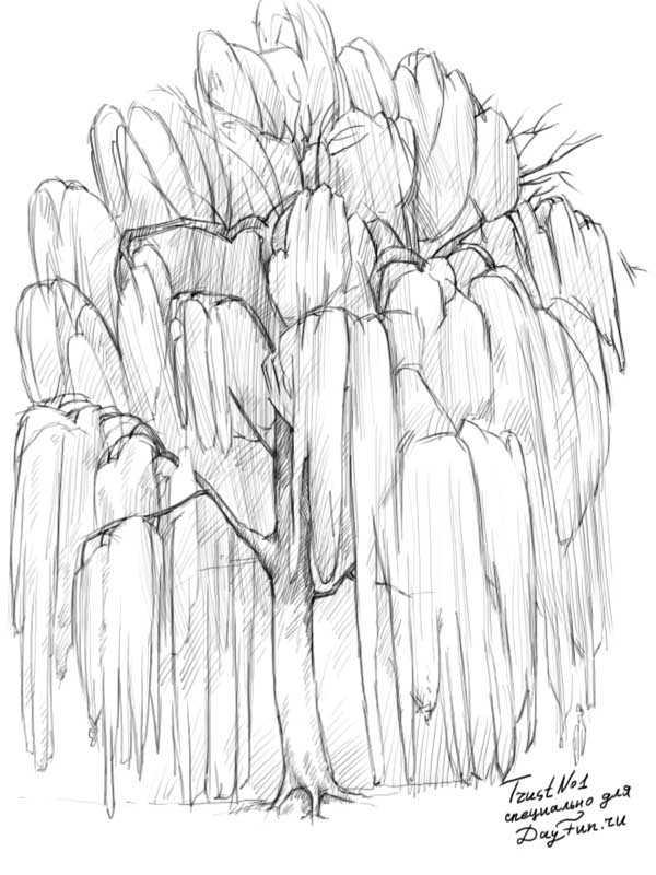Ива рисунок – Ой! Уроки рисования для начинающих, мультики ...