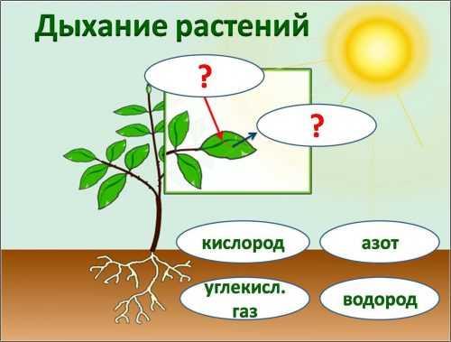 kak-narisovat-komnatnoe-rastenie-poetapno-detyam_103.jpg