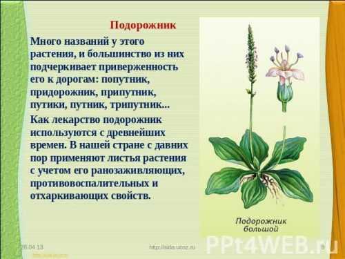 kak-narisovat-komnatnoe-rastenie-poetapno-detyam_52.jpg