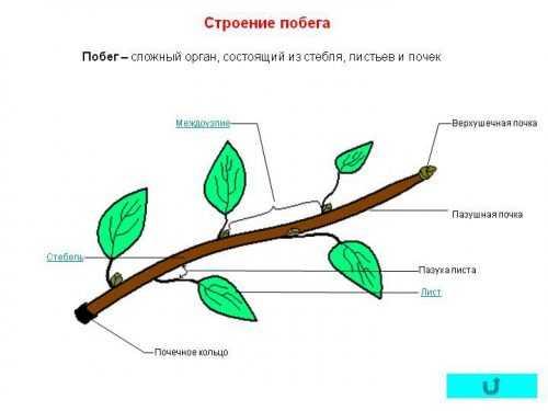 kak-narisovat-komnatnoe-rastenie-poetapno-detyam_56.jpg