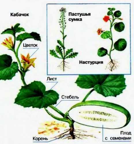 kak-narisovat-komnatnoe-rastenie-poetapno-detyam_58.jpg