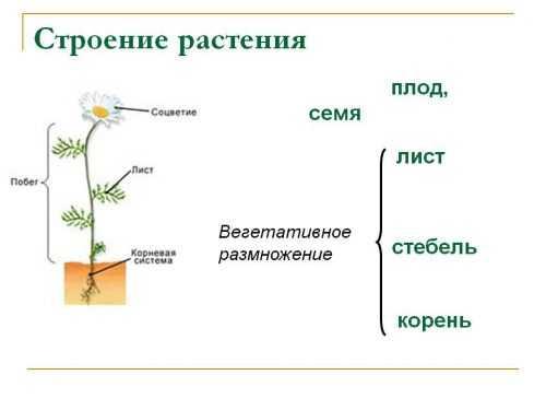 kak-narisovat-komnatnoe-rastenie-poetapno-detyam_59.jpg
