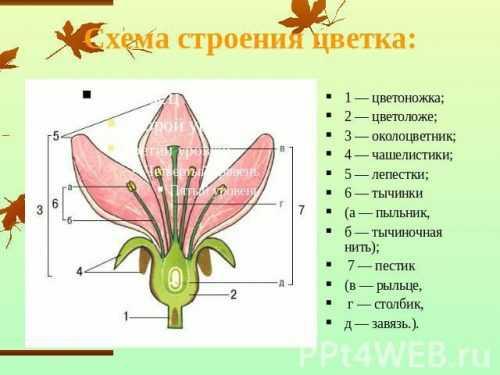 kak-narisovat-komnatnoe-rastenie-poetapno-detyam_61.jpg