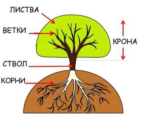 kak-narisovat-komnatnoe-rastenie-poetapno-detyam_62.jpg