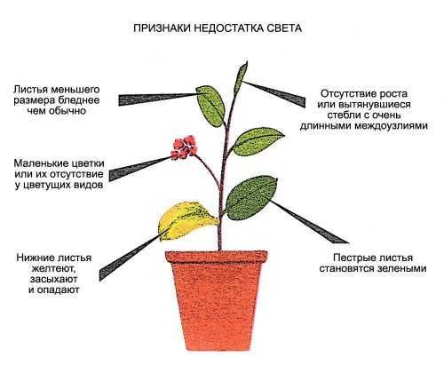 kak-narisovat-komnatnoe-rastenie-poetapno-detyam_76.jpg