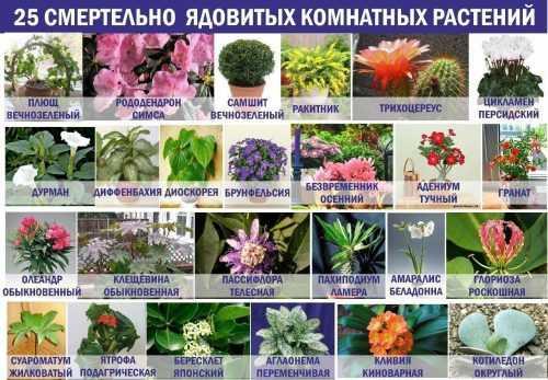kak-narisovat-komnatnoe-rastenie-poetapno-detyam_77.jpg