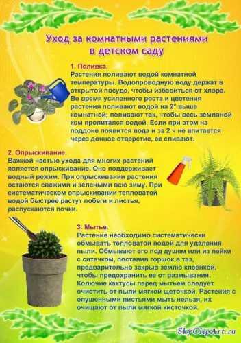 kak-narisovat-komnatnoe-rastenie-poetapno-detyam_80.jpg