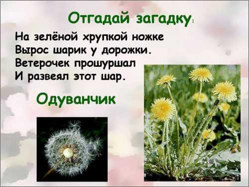 kak-narisovat-komnatnoe-rastenie-poetapno-detyam_85.jpg