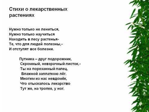kak-narisovat-komnatnoe-rastenie-poetapno-detyam_86.jpg