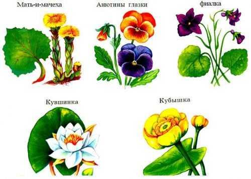 kak-narisovat-komnatnoe-rastenie-poetapno-detyam_92.jpg