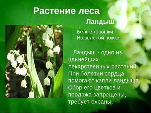 kak-narisovat-komnatnoe-rastenie-poetapno-detyam_94.jpg