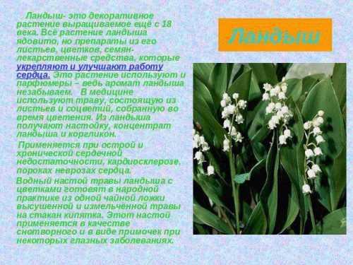 kak-narisovat-komnatnoe-rastenie-poetapno-detyam_95.jpg