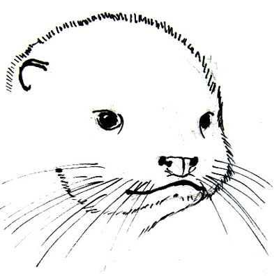 Как нарисовать выдру – Как нарисовать выдру карандашом ...