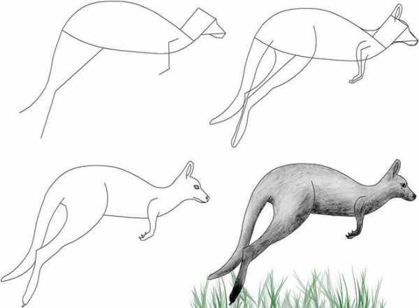 Как рисовать кенгуру для детей – Как нарисовать кенгуру ...