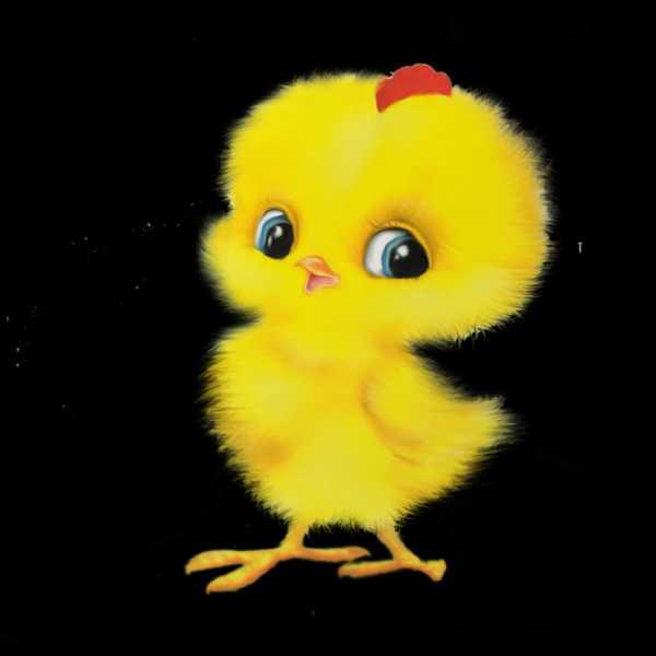 Цыпленок рисунок прикольный