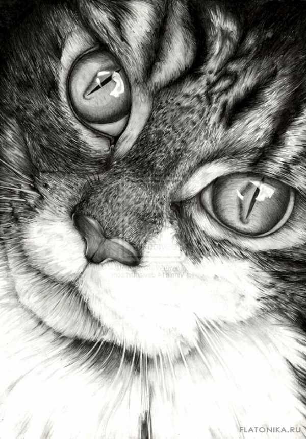 Фото рисунок кота