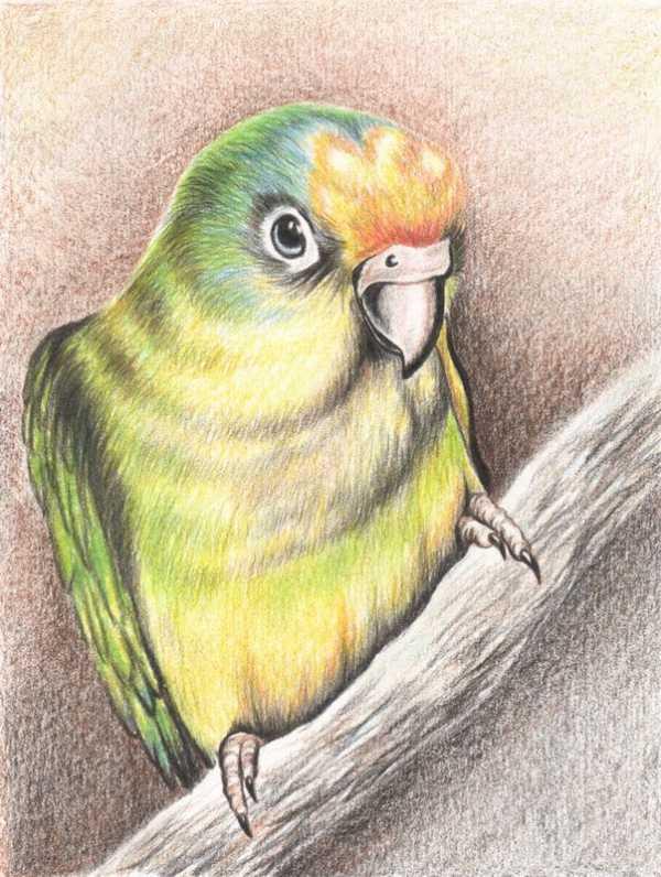 "Рисунки карандашом для срисовки "" of the user"
