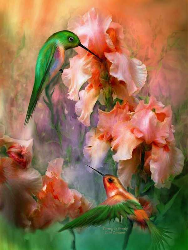 Картинки с райскими птицами
