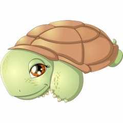 Раскрасить черепаху – Раскраска Черепаха Скачать И ...
