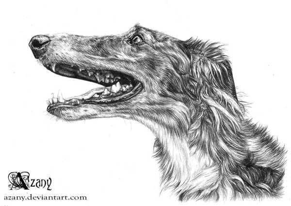 Собака сидит рисунок – Учимся рисовать щенка поэтапно ...